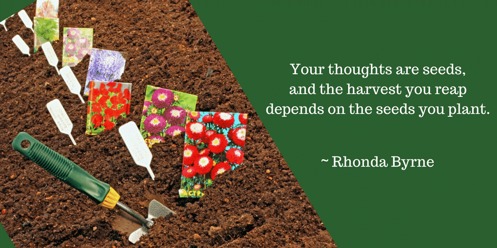 What Are You Planting in your Garden? By Rhonda Wise